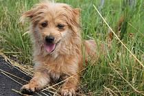 Kubíček je nejspíš kříženec, asi 2 roky starý pes, v kohoutku měří 33 centimetrů. Byl nalezen uvázaný v parku v Žatci. Kubíček je malý kapesní pejsek, srandista co rád dovádí. Na vodítku chodí krásně a na povel sedni se zvednutým prstem si umí lehnout.