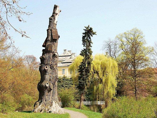 Jednou zdominant parku je Goethův dub, 800až 1000let staré torzo.