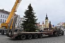 Na žatecké náměstí Svobody dorazil vánoční strom.