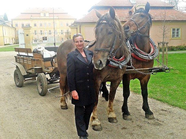 Iveta Vašková připravuje koně před zámkem v Krásném Dvoře na Podbořansku.