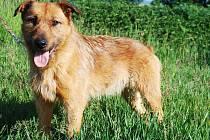 Lipánek je střední hrubosrstý kříženec, 4 roky starý. K lidem je velmi přátelský a umí základní povely. Vůči ostatním psům je dominantní. Je to ideální pes k domku se zahrádkou, kde bude rád střežit své území.