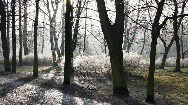 Stromy a zimní slunce v lounském parku. Archivní foto