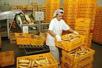 Gabriela Klementová skládá do přepravek právě upečené rohlíky v žatecké pekárně.
