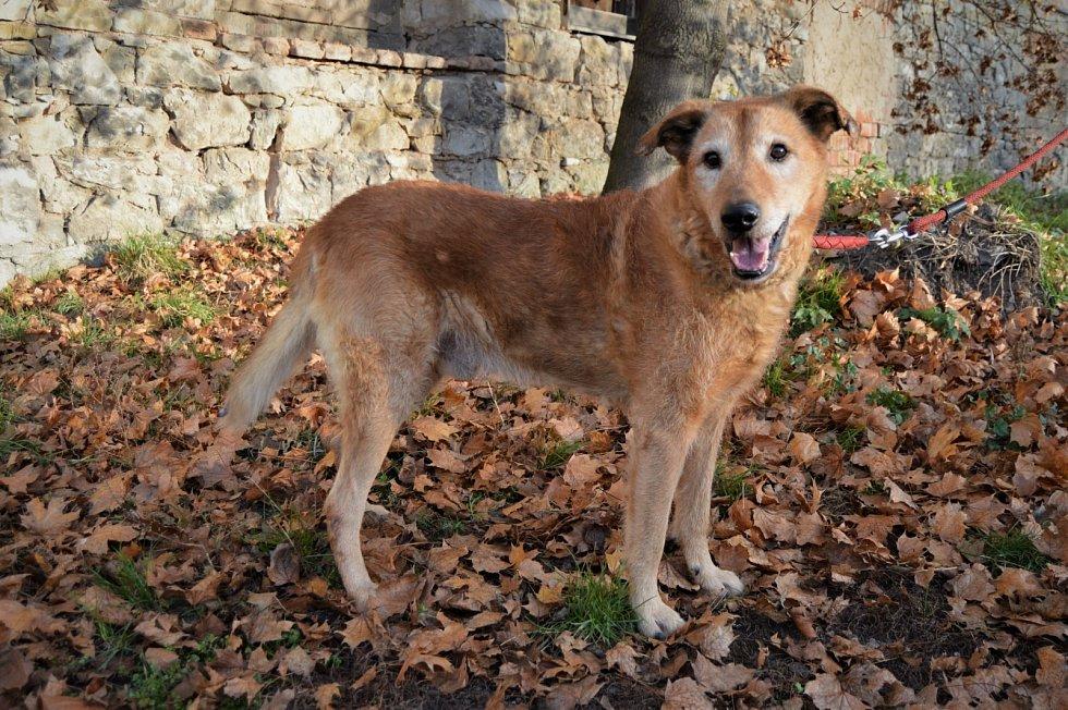 Baryk je psí dědoušek. Miluje klidné procházky a čucháníčko.
