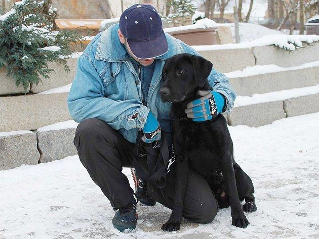Starosta je nejspíše kříženec LR, asi rok starý pes, v kohoutku 63 cm. Je v dobrém zdravotním stavu. Starosta je mladý kontaktní pes, který umí chodit na vodítku. Je velmi učenlivý, miluje pohyb a lidskou přízeň.