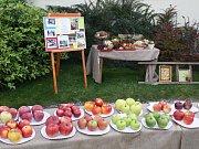 Výstava ovoce v žatecké Křížově vile