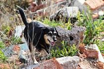 Nejlepší psí záchránáři a jejich psovodi měřili síly v Žatci na prestižním Prezidentském poháru ve vyhledávání osob.