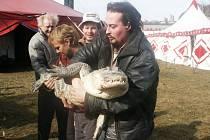 Hlavní hvězdou show bude krokodýl Romeo, kterého bude krotit Karel Berousek mladší.