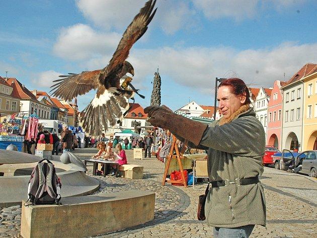 Věra Gilová přijela na farmářské trhy do Žatce se svými dravými ptáky.