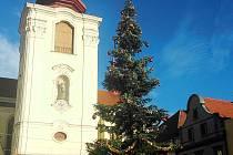 Vánoční strom na Hošťálkově náměstí v Žatci.