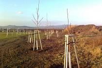 Nové stromy u hřiště ve Slavětíně.