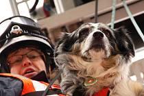 Záchranáři se psy přímo v žatecké požární stanici skládali zkoušky ze sutinového vyhledávání osob