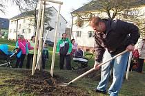 Rodiče nově narozených dětí při tradiční akci sázejí stromky v lokalitě Barborka. Chystané úpravy  lokality se mají týkat i prostranství, kde město umožňuje sázení stromků.