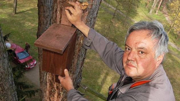 Drahoslav Mašek z technických služeb připevňuje na strom v žateckém parku pod nemocnicí ptačí budku.