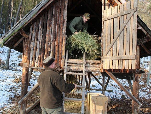 Myslivci Václav Šedivý (nahoře) a Martin Keil při práci v krmelci v lese u Markvarce.