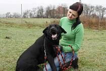 Ambrož je nejspíše kříženec LR, statný, asi pět let starý pes, v kohoutku měří 59 cm. Odchycen byl v Žatci.