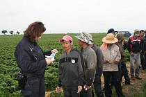 Kontrola cizinecké policie na jahodových plantážích u Hořetic