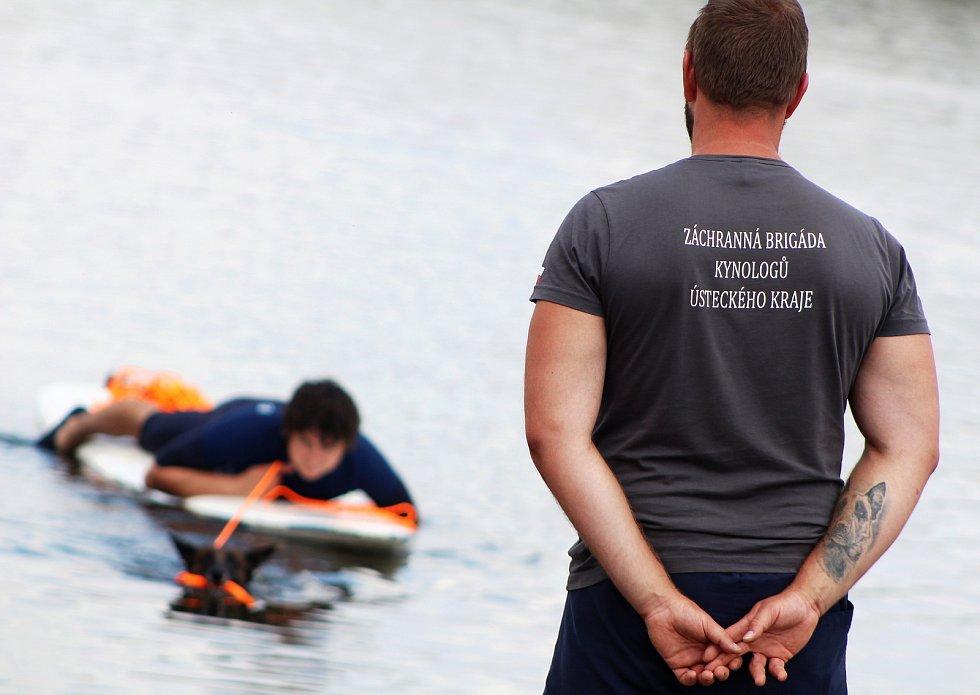 Čtyřnozí záchranáři umí i ve vodě. Na Nechranické přehradě se konaly závody záchranářů kynologů, jejich svěřenci umí přitáhnout na břeh člun, unaveného surfaře, na břeh dostanou i topícího se plavce.