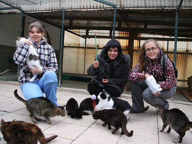 Lucka Paulová, Jana Pěkná a Monika Doubravová v lounském útulku pro kočky Felca