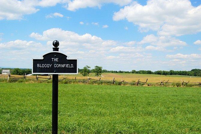 Kukuřičné pole na místě jednodenní krvavé bitvy.
