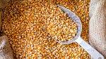 Kukuřice je v USA surovinou číslo 1.