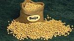 Už před 5 000 lety se vČíně infekce léčily obklady ze sójové plísně.