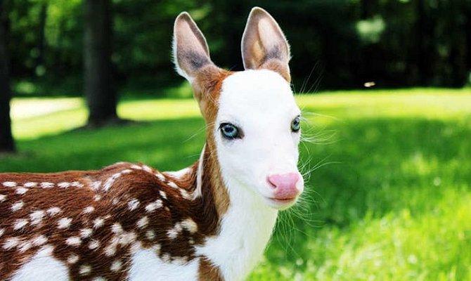 I u zvířat ja albinismus velmi vzácný.