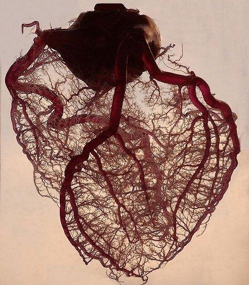 Odhaduje se, že v těle je zhruba 96 500 kilometrů cév.