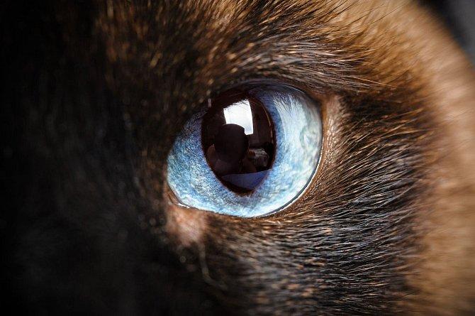 Oko kočičí. Krása.