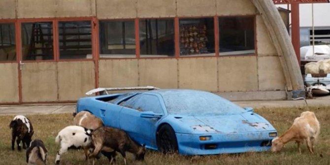 Ano, vidíte dobře, i kozy si mají kde hrát