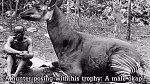 Domorodý lovec se svým úlovkem. Fotografie z roku 1915. Jedná se o okapi obývající deštné pralesy okolo řeky Kongo. Tato příbuzná žiraf byla až do roku 1901 známa jen domorodcům, kteří ji lovili.