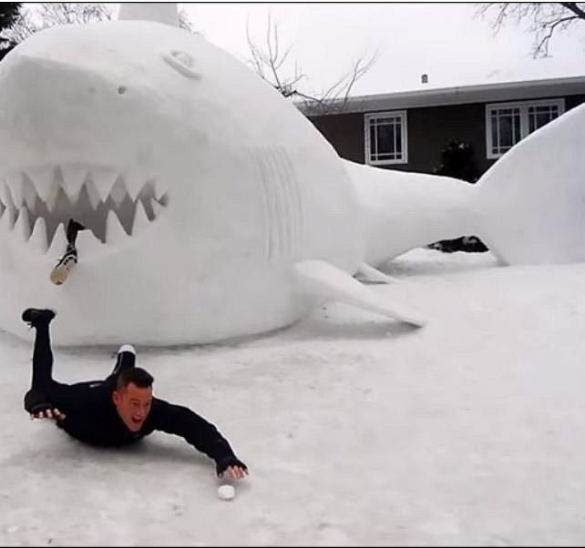 Pozor na žraloky. Nejhorší jsou ti sněžní!