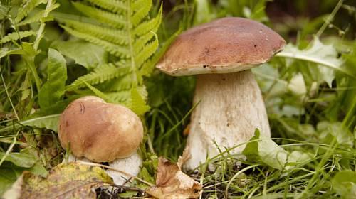 Houbařská sezóna je v plném proudu! Máme pro vás 10 rad, jak nejlépe sbírat houby