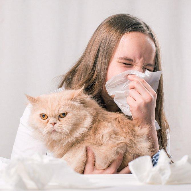 Pro alergiky může být kočka problém. Někdy stačí pravidelný úklid a omezení mazlení, jindy je třeba mazlíka přesunout k příbuzným.
