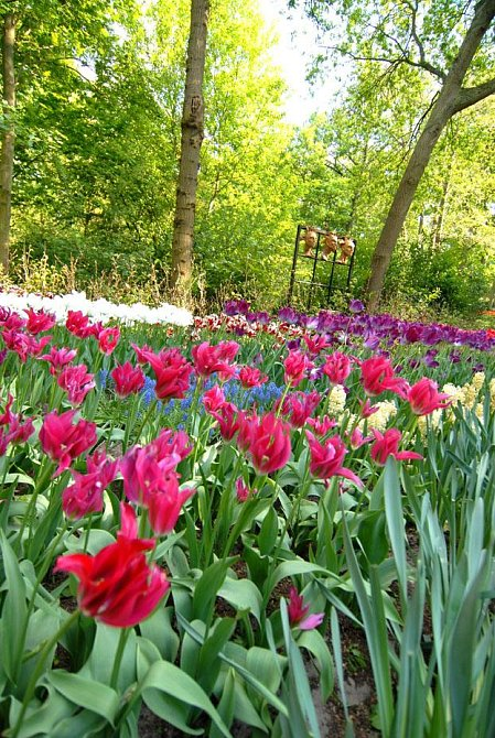 Keukenhof – ráj pro ženy i milovníky květin