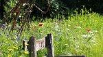 Dojem louky se pomalu vkrádá i na české zahrady.
