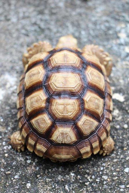 Ilustrační foto - želví krunýř