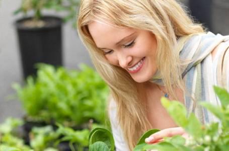 5 pokojových rostlin pro lenochy
