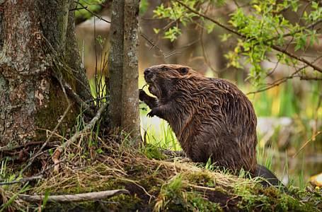 Člověk a příroda – dramatický vztah, který se neustále vyvíjí