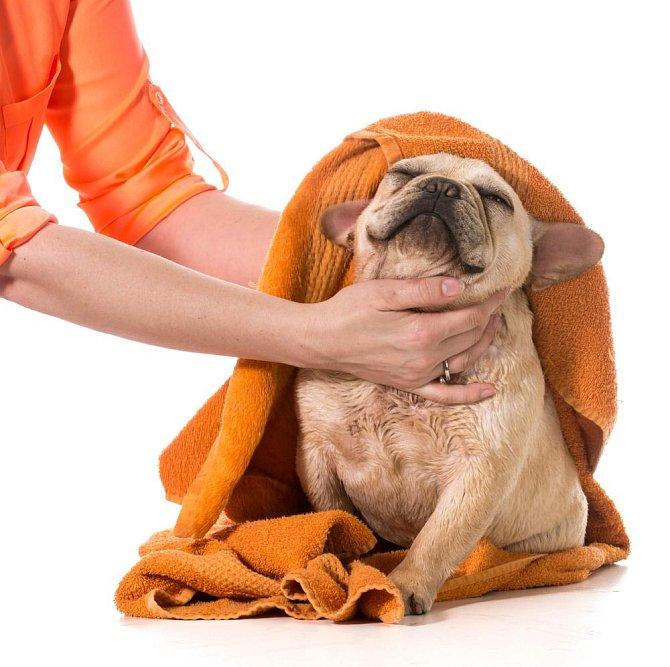 Ilustrační foto - psí koupání