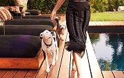 Jennifer má dohromady tři psy, Clyda a Sophii a křížence bílého ovčáka Dolly.