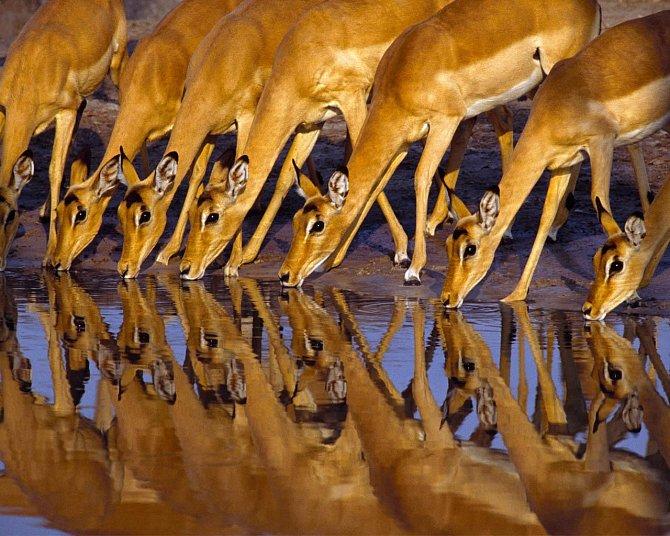 Velkolepá jubilejní výstava časopisu National Geographic