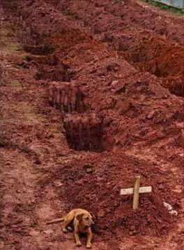 V roce 2011 Rio de Janeiro postihlo silné zemětřesení. Věrný pes odmítá opustit svého pána i po jeho pohřbu.