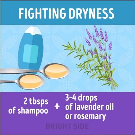 Pomoci s vysušenými vlasy vám může směs 2 lžic běžného šamponu se 3 - 4 kapkami levandulového, nebo rozmarýnového oleje.