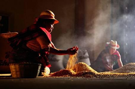 Neuvěřitelné tajemství aroma kávy – Až 800 aromatických látek v jediném zrnku