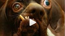 Nejošklivější psi světa 2016