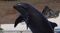 delfín/kosatka