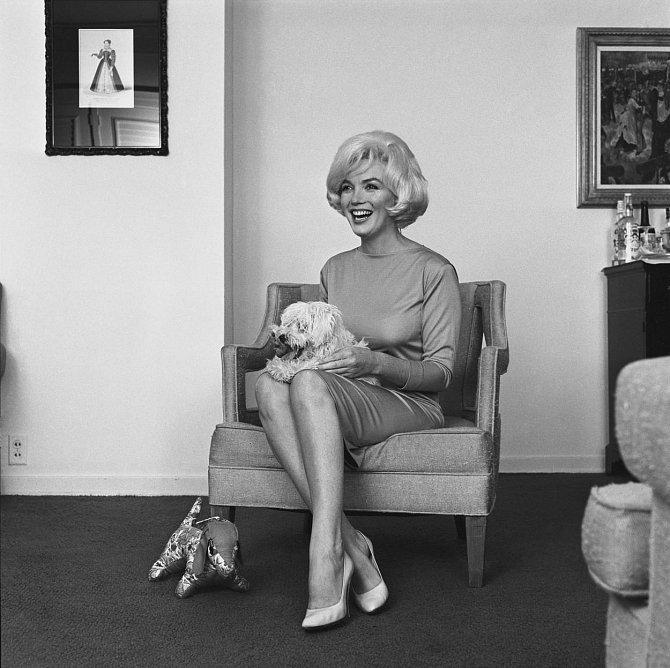 15. Frank Sinatra věnoval Marilyn, aby ji utěšil z rozchodu s Arthurem Millerem, maltézského teriéra. Pes dostal jméno Mafia Honey (zkáceně Maf) a strávil s Marilyn poslední dva roky jejího života.