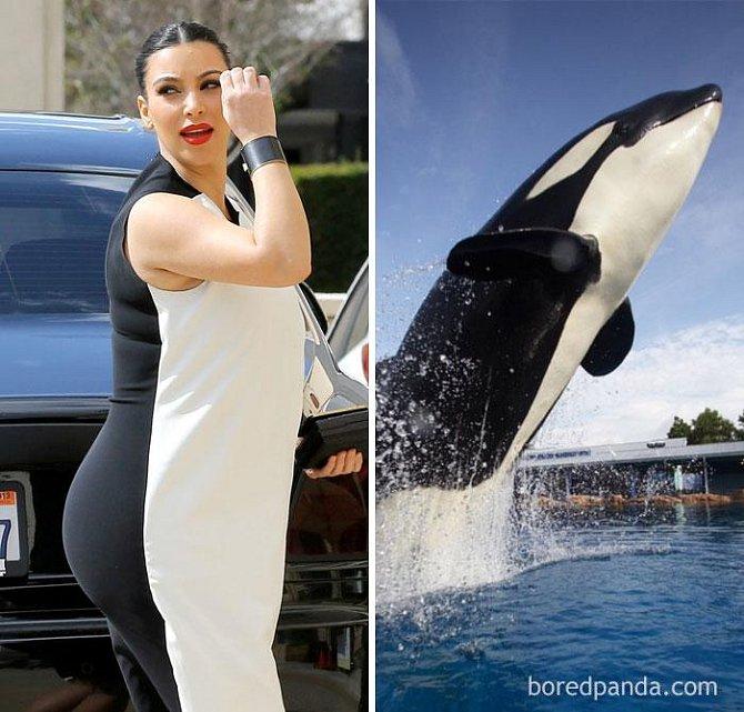 Kim Kardashian, nebo kosatka?