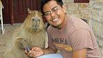 Kapybary jsou prý jako domácí mazlíček strašně super.